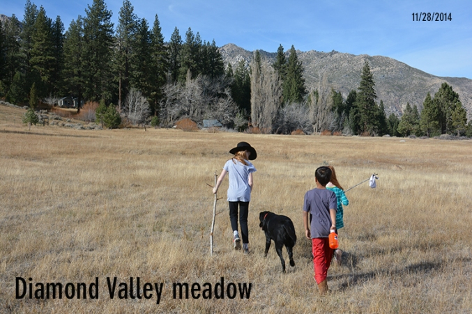 diamondvalleymeadow